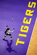 Volleyball vs Missouri<br /> Photo by Brandon Gallego