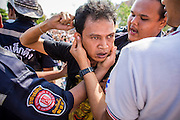 "23 MARCH 2013 - NAKHON CHAI SI, NAKHON PATHOM, THAILAND:  A man is restrained by volunteer medics who calm him and bring him out of a trance by rubbing his ears at the close of the Wat Bang Phra tattoo festival. Wat Bang Phra is the best known ""Sak Yant"" tattoo temple in Thailand. It's located in Nakhon Pathom province, about 40 miles from Bangkok. The tattoos are given with hollow stainless steel needles and are thought to possess magical powers of protection. The tattoos, which are given by Buddhist monks, are popular with soldiers, policeman and gangsters, people who generally live in harm's way. The tattoo must be activated to remain powerful and the annual Wai Khru Ceremony (tattoo festival) at the temple draws thousands of devotees who come to the temple to activate or renew the tattoos. People go into trance like states and then assume the personality of their tattoo, so people with tiger tattoos assume the personality of a tiger, people with monkey tattoos take on the personality of a monkey and so on. In recent years the tattoo festival has become popular with tourists who make the trip to Nakorn Pathom province to see a side of ""exotic"" Thailand. The 2013 tattoo festival was on March 23.    PHOTO BY JACK KURTZ"