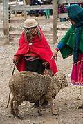 Indian woman in market<br /> Maria Antonia Morocha<br /> Calpi animal market<br /> Parish of Riobamba, Chimborazo Province<br /> Andes<br /> ECUADOR, South America