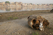 Across the Ganges River from the cremation ghats in Varanasi, India, human remains wash up on the sandy shore. A human skull.