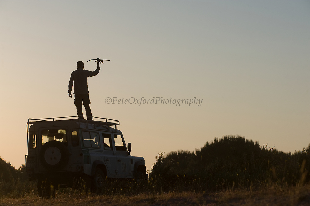 Life Lince (lynx) field technician, Leonardo Fernandez Pena radio tracking a collared Iberian Lynx (Lynx pardinus)<br /> Doñana National & Natural Park. Huelva Province, Andalusia. SPAIN<br /> 1969 - Set up as a National Park<br /> 1981 - Biosphere Reserve<br /> 1982 - Wetland of International Importance, Ramsar<br /> 1985 - Special Protection Area for Birds<br /> 1994 - World Heritage Site, UNESCO.<br /> The marshlands in particular are a very important area for the migration, breeding and wintering of European and African birds. It is also an area of old cultures, traditions and human uses - most of which are still in existance.<br /> <br /> Mission: Iberian Lynx, May 2009<br /> © Pete Oxford / Wild Wonders of Europe<br /> Zaldumbide #506 y Toledo<br /> La Floresta, Quito. ECUADOR<br /> South America<br /> Tel: 593-2-2226958<br /> e-mail: pete@peteoxford.com<br /> www.peteoxford.com