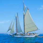 "The Schooner ""Isaac Evans"" sailing on Penobscot Bay off Rockland, Maine"