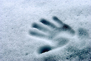 Imprint of a young child's hand in fresh snow