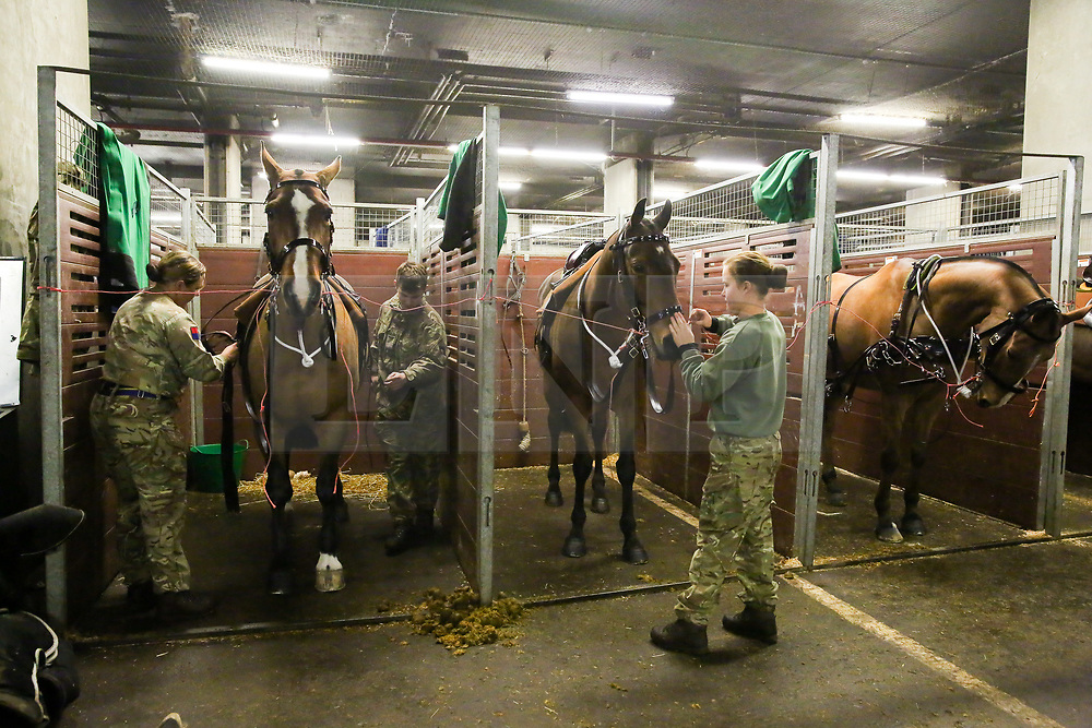 © Licensed to London News Pictures. 006/02/2019. London, UK. Members of The King's Troop Royal Horse Artillery prepare their horses in their temporary stables in Wellington Barracks. Later today, they will ride their horses and gun carriages up Birdcage Walk, past Buckingham Palace and fire a 41-gun salute to mark the 67th anniversary of the Queen Elizabeth II's accession to the throne, in Green Park.  Photo credit: Dinendra Haria/LNP