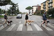 Cani guida