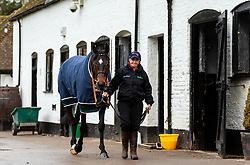 Altior lead out from his stall during the visit to Nicky Henderson's yard at Seven Barrows, Lambourn.
