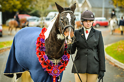 A poppy garland is worn by Sergeant Major 'Rocky' as he is led onto parade by Eleanor Goodsell, 17, from Plymouth, at the Royal Navy and Royal Marines Riding Stables at Bickleigh Barracks, Plymouth, during the first ever memorial service dedicated to horses killed or injured in conflict.