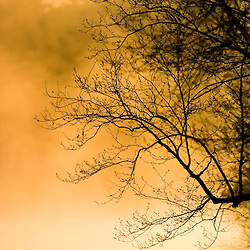 Early morning in spring on Walden Pond State Reservation, Concord, Massachussets.