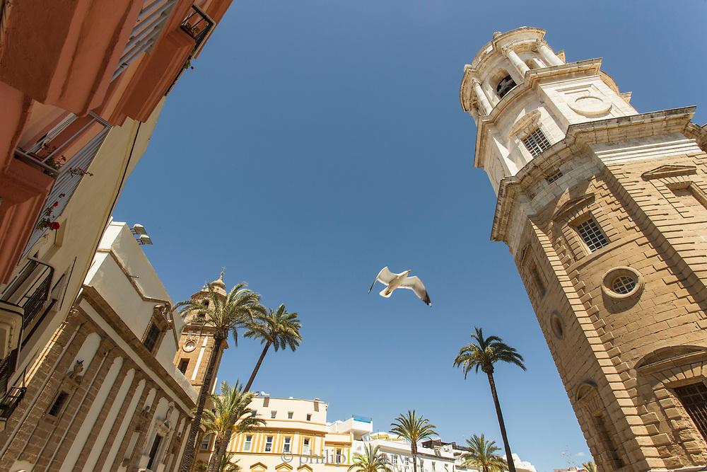 Low angle view of seagull in Plaza de la Catedral in Cadiz, Spain