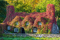 © Licensed to London News Pictures. 21/09/2020. Llanrwst UK. A lady sunbathes  outside the Tu Hwnt I'r Bont tea room in Llanrwst, Wales, where the Virginia Creeper has turned bright red the day before Autumn in the UK. Photo credit: Andrew McCaren/LNP