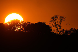 © Licensed to London News Pictures. 13/09/2020. Swansea, UK. The sun dips behind trees on a beautiful evening on Gower, Swansea  in south Wales. The UK enjoyed a fine weekend of warm and sunny weather. Photo credit: Robert Melen/LNP