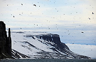 Birds fly over Arctic mountain landscape, Svalbard, Norway