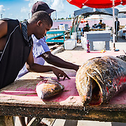 A Goliath grouper (Epinephelus itajara) for sale at a market in Nassau, Bahamas.