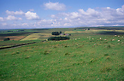 Looking north over farming landscape near Cawburn, Northumberland national park, England