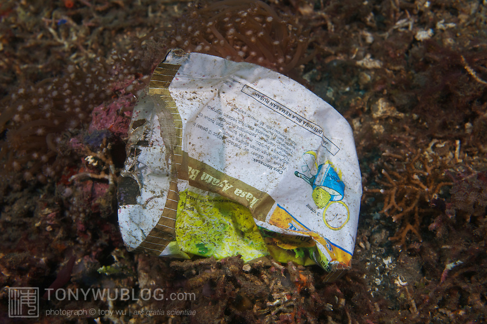 Trash on top of marine life in Lembeh Strait, North Sulawesi, Indonesia