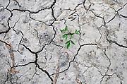 Nederland, Nijmegen. 19-7-2018Drooggevallen bedding van een zijgeul van de Waal in de Ooijpolder.Door de lage waterstand is er geen aanvoer van water vanuit de rivier . Door het uitblijven van regen is de grond gebarsten. Een zaadje in de bodem is ontkiemd en door een scheur bovende grond gekomen. Als het langer droog blijft zal de plant niet groot worden .Foto: Flip Franssen