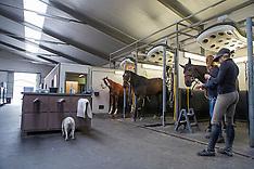 Artisan Farms Belgium 2013