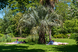 © Licensed to London News Pictures. Visitors take shade under a tree in the Chelsea Physic Garden during the hot midday sun as temperature rise to 26C.  Photo credit: London News Pictures
