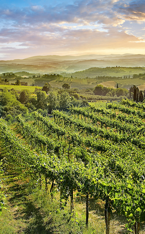 Chianti vineyards and vines of San Gimignano at sunrise, Tuscany Italy .<br /> <br /> Visit our ITALY PHOTO COLLECTION for more   photos of Italy to download or buy as prints https://funkystock.photoshelter.com/gallery-collection/2b-Pictures-Images-of-Italy-Photos-of-Italian-Historic-Landmark-Sites/C0000qxA2zGFjd_k<br /> If you prefer to buy from our ALAMY PHOTO LIBRARY  Collection visit : https://www.alamy.com/portfolio/paul-williams-funkystock/sangimignano.html