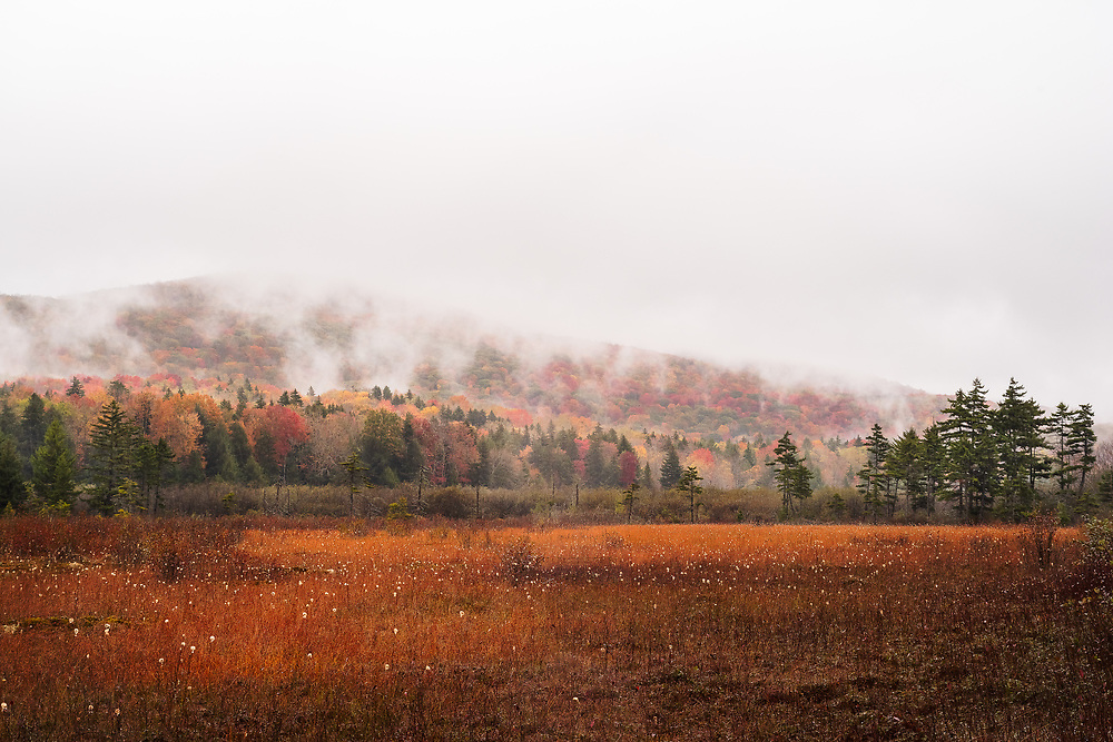 Rain and fog envelop the bright, glowing autumn foliage of the Cranberry Glades in West Virginia