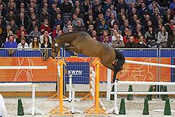274 - Black Bird<br /> KWPN Stallion Selection - 's Hertogenbosch 2014<br /> © Dirk Caremans