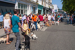 Primrose Hill, London, May 18th 2014. Competitors line up at the Primrose Hill Fair dog show as Londoners enjoy the hottest day of the year so far.