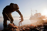 A man cleans and prepares King Crab to be cooked on the banks of a lake at Jarfjord, Finnmark region, northern Norway