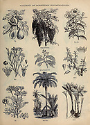 Gallery of Scripture Illustrations of plants and crops from ' The Doré family Bible ' containing the Old and New Testaments, The Apocrypha Embellished with Fine Full-Page Engravings, Illustrations and the Dore Bible Gallery. Published in Philadelphia by William T. Amies in 1883