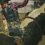 A cowboy holds on for the highest score of the evening in the bullriding qualifier for the Jackson Hole Rodeo, Jackson, Wyoming.