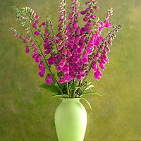 Foxglove - Irish Wildflower Series I