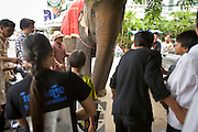 04 JULY 2006 - PHNOM PENH, CAMBODIA: Cambodians gather around an elephant on Sisowath Quay, the main riverfront boulevard in Phnom Penh, Cambodia.   Photo by Jack Kurtz