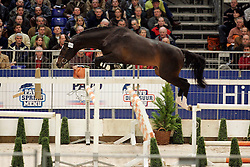 106 - W. Termie<br /> KWPN Hengstenkeuring 2006<br /> Photo © Hippo Foto