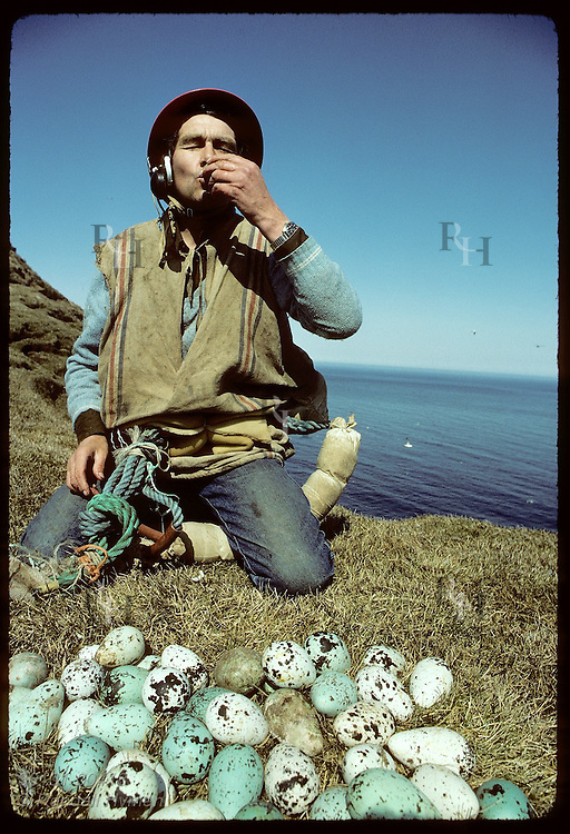Grimsey Islander kneels by murre eggs he gathered off cliffs and drinks raw egg as an aphrodisiac Iceland