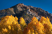 Fall color along Bishop Creek, Inyo National Forest, Sierra Nevada Mountains, California USA