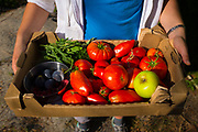 Box of organic fruit and vegetables from home garden, Pyrenees Orientales, France