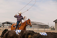 Will James Roundup, Ranch Rodeo, Three Man Cow Doctoring, Hardin, Montana, KC Verhelst, MODEL RELEASED, PROPERTY RELEASED horse & rider