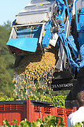 Machine harvest. Semillon. Despagne Vineyards and Chateaux, Bordeaux, France