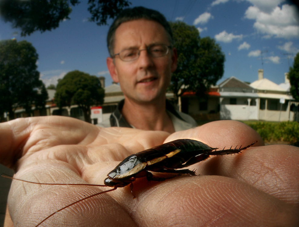 Simon Dixon an entomologist of exopest shows a native cockroach which have been needlessly causing concern for residents as they come inside seeking moisture in the drought  .Pic By Craig Sillitoe SPECIALX 000 melbourne photographers, commercial photographers, industrial photographers, corporate photographer, architectural photographers, This photograph can be used for non commercial uses with attribution. Credit: Craig Sillitoe Photography / http://www.csillitoe.com<br /> <br /> It is protected under the Creative Commons Attribution-NonCommercial-ShareAlike 4.0 International License. To view a copy of this license, visit http://creativecommons.org/licenses/by-nc-sa/4.0/.