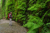 Fern Canyon, Prairie Creek Redwoods State Park,  California