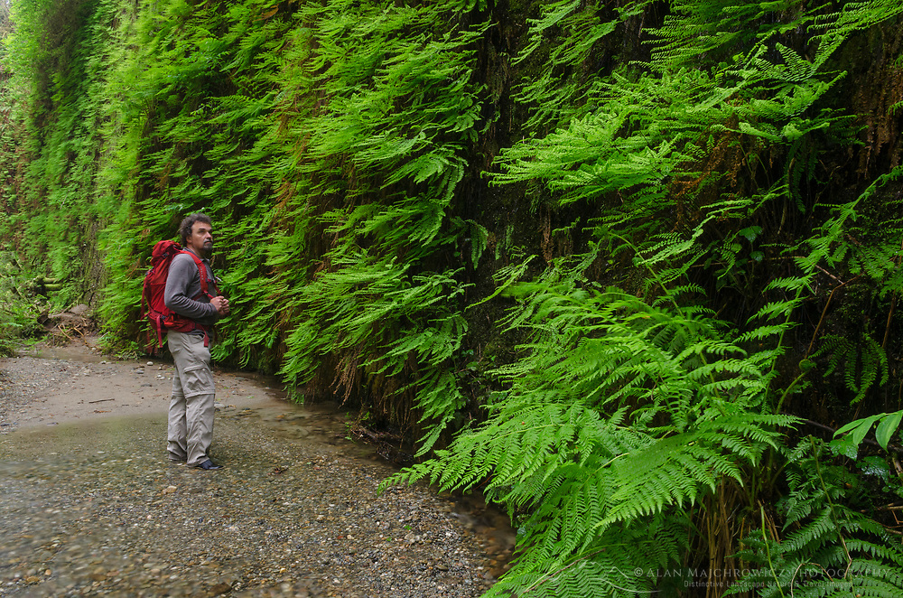 Fern Canyon, Prairie Creek Redwoods State Park,  California