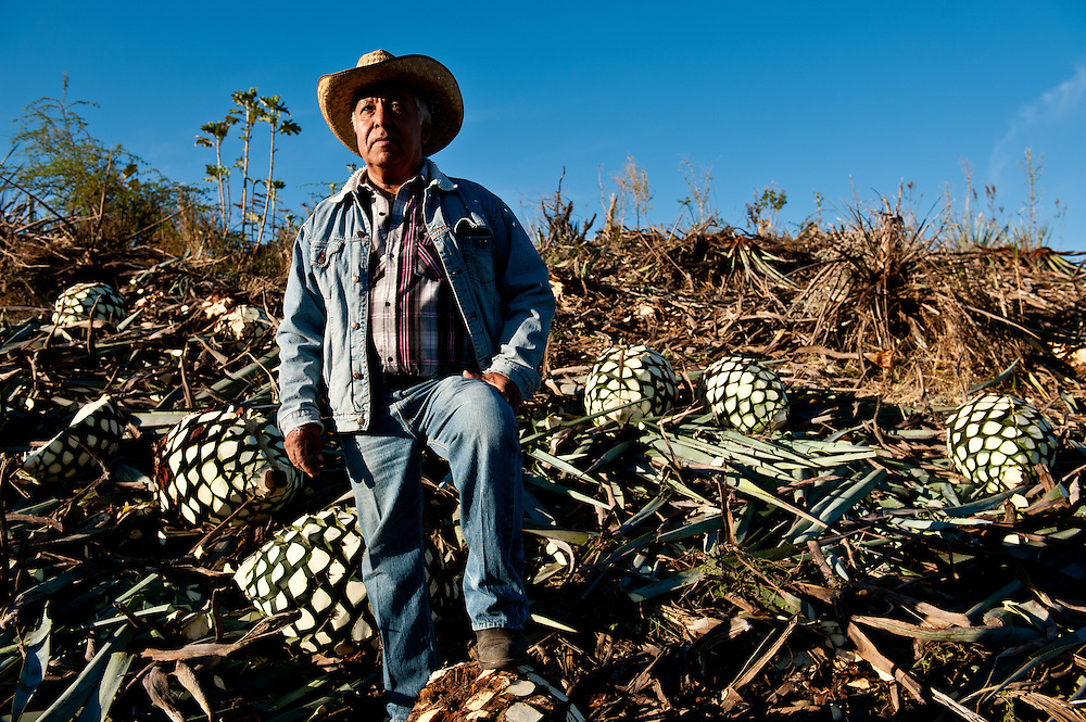 José Guadalupe Robles Guzmán at his agave farm near Tequila. He sells his harvested agave heads, or pinas, which can weigh upwards of a hundred pounds to Tequila Fortaleza, an artisanal producer in the town of Tequila.