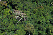 Rainforest Canopy<br /> GUYANA<br /> South America