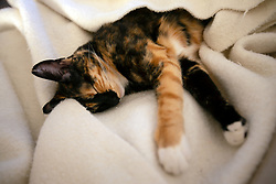 Zelda the cat naps on the couch in the living room of her Oakland, Calif. home, Monday, Feb. 10, 2020. (Photo by D. Ross Cameron)