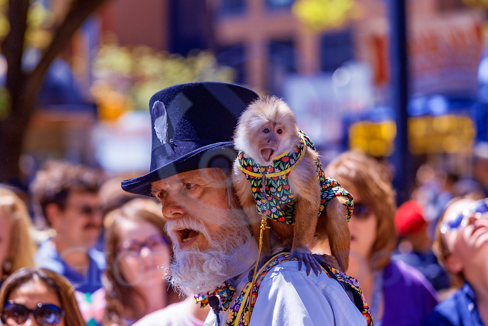York, PA - May 8, 2016: A bearded man with a monkey entertained people at the City of York Annual Mother's Day Street Fair.