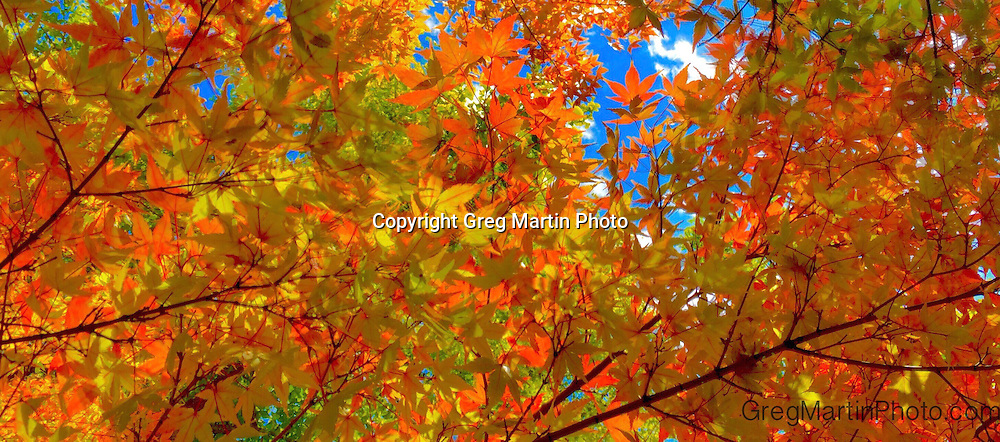 Free Fall Colors Banner<br /> Prints available