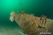 diver explores wreck site known as The Barges - actually three sections of a floating dock sunk off Grande Island or Fort Wint, at the entrance to Subic Bay, Philippines, at a depth of 6-31 m; MR 378
