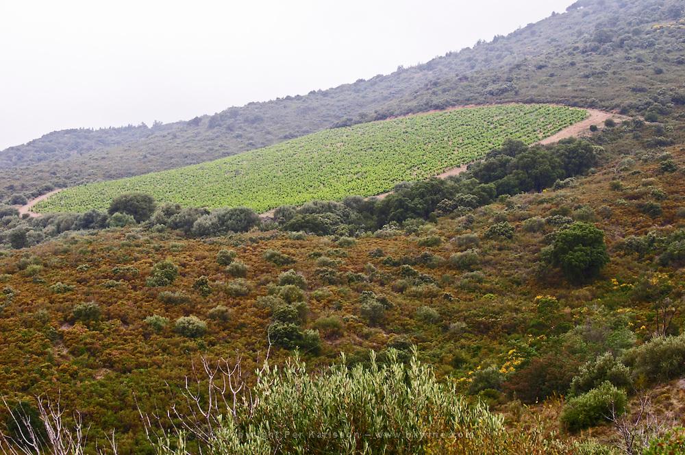 Vineyard. Domaine Boucabeille, Corneilla la Riviere, Roussillon, France