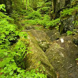 Devil's Gulch in Eden, Vermont.  The Long Trail.  Green Mountains.  Summer.