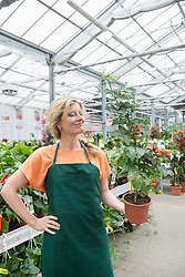 Female shop assistant holding tomato plant in garden centre, Augsburg, Bavaria, Germany