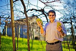 O engenheiro Agrônomo, Umberto Almeida Camargo, que coordenou a criação de variedades nacionais de uvas sem sementes, Clara, Linda e Morena, nos parreirais no interior de Bento Gonçalves. FOTO: Jefferson Bernardes/Preview.com